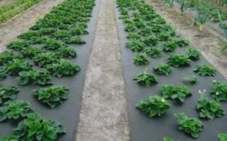 Разновидности агроволокна и их применение