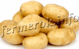 Лучшие представители раннего картофеля