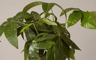 10 самых популярных полезных растений с описанием и фото