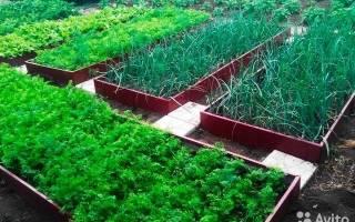 Что еще можно успеть посадить в июле на огороде?