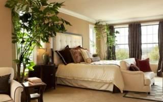 Как выбрать комнатные растения для спальни