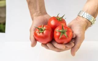 Помидоры сорта любаша особенности раннего сорта томата
