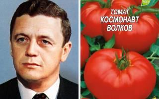 Сорт помидор космонавт волков характеристика и агротехника выращивания
