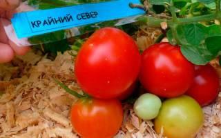 Как посадить и вырастить томат крайний север