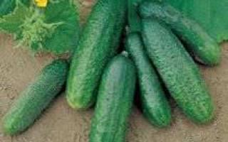 Огурец либелле описание и выращивание