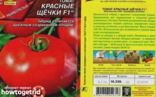 Описание и выращивание томата красные щёчки для открытого грунта