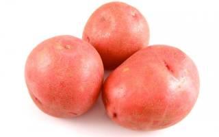 Сорт картофеля краса характеристика агротехника выращивания
