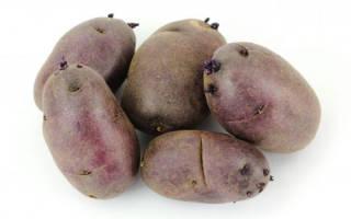 Сорт картофеля чёрный принц характеристика агротехника выращивания