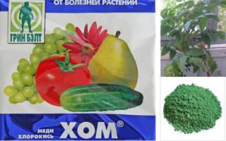 Как применять препарат хом от болезней томатов огурцов и картофеля