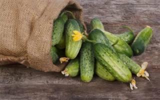 Какие сорта огурцов подойдут для выращивания на северо западе страны