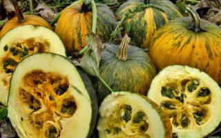 Описание и фото твердокорых сортов тыквы