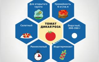 Преимущества и недостатки помидоров роза ветров особенности выращивания вкусных томатов