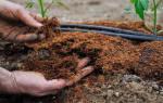 Чем подкормить помидоры удобрение томатов после высадки в грунт