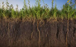 Какие существуют виды почв