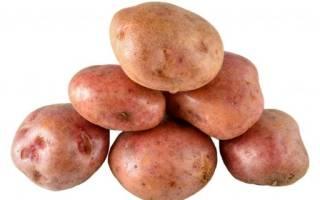 Сорт картофеля кураж характеристика секреты успешного выращивания