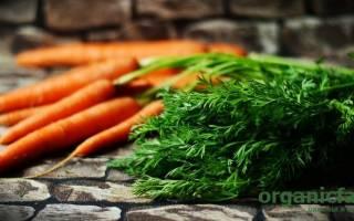 Чем полезна морковная ботва химический состав и применение