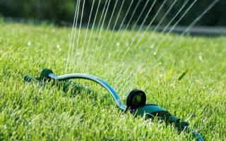 Как правильно и сколько поливать газон