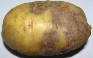 Методы борьбы с болезнями картофеля