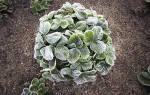 Как защитить сад и огород от заморозков