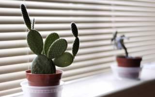 Созданы для ленивых 10 самых неприхотливых комнатных растений