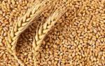 Низкие темпы экспорта зерна в россии грозят кампании посадки