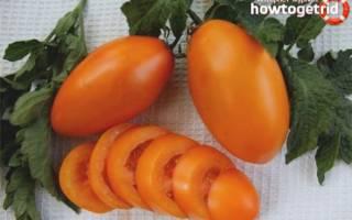 Описание и выращивание томата золотой поток для открытого грунта