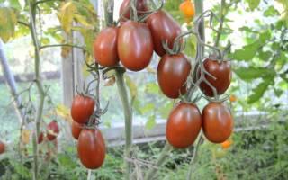 Помидоры черный мавр характеристика секреты успешного выращивания