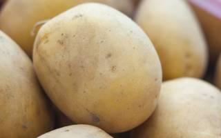 Сорт картофеля метеор характеристика агротехника выращивания