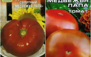 Сорт помидор медвежья лапа характеристика секреты успешного выращивания