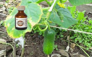 Как использовать йод в саду и на огороде советы бывалых