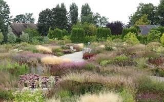 9 декоративных злаковых растений для вашего сада