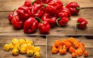 Острый перец хабанеро основные характеристики и правила выращивания перца