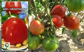 Крупноплодный низкорослый сорт томатов видимо невидимо