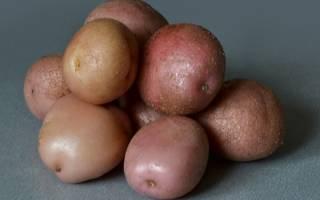 Картофель романо характеристика агротехника выращивания