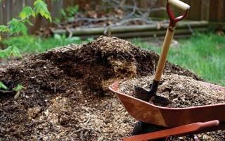 Для чего нужно мульчирование почвы особенности применения агротехнического приема