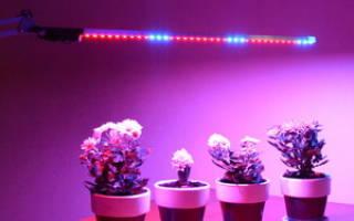 Особенности использования подсветки и правила выбора ламп для комнатных растений