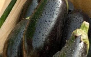 Лучшие сорта баклажанов для выращивания в сибири