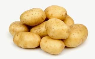 Сорт картофеля голландской селекции импала