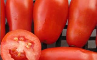 Общие сведения и выращивание сорта помидоров французский гроздевой