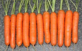 Авторский сорт моркови тушон