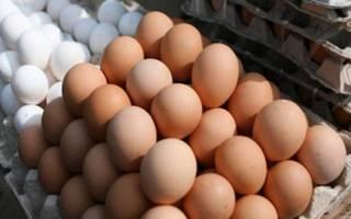 Дезинфекция и мытьё яиц перед инкубацией в домашних условиях