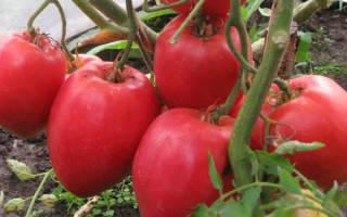 Ранний сорт томатов большая мамочка