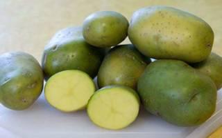 Съедобна ли зеленая картошка симптомы отравления и помощь