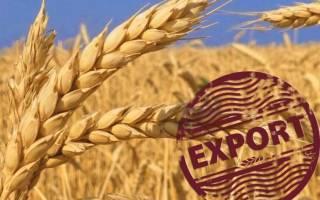Заместитель министра назвала перспективные рынки для украинского аграрного экспорта
