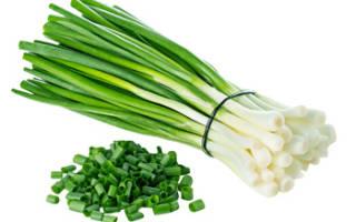 Гусиный лук польза и вред для здоровья человека