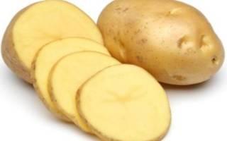 Картофель невский особенности сорта  посадка и уход