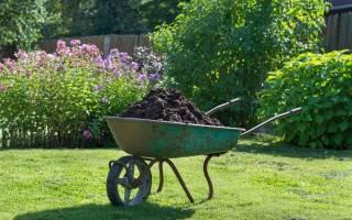 Выбираем весенние удобрения для огорода