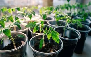 Как и когда высаживать рассаду томатов в открытый грунт