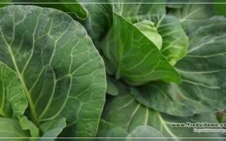 Как бороться с капустницой на даче