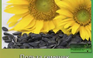 Чем полезны семечки подсолнуха для женщин
